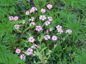 Ethan - flowers